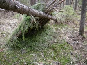 Выживание в лесу - YouTube
