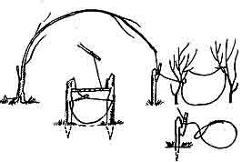 Неподвижная петля-ловушка на мелкую дичь