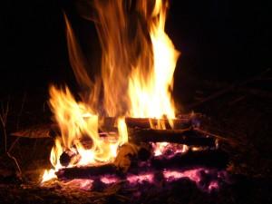 Как горят различные породы деревьев