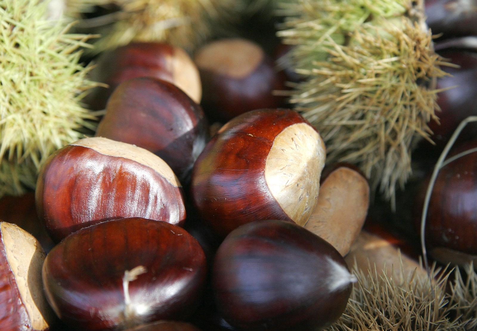 Добыча пищи в лесу орехи