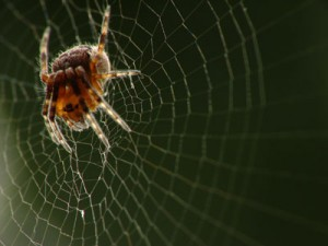 Аккуратно, паутина!