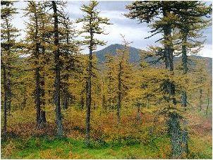 Голоса леса