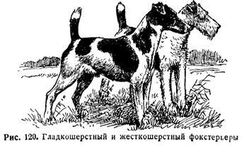 Норные собаки