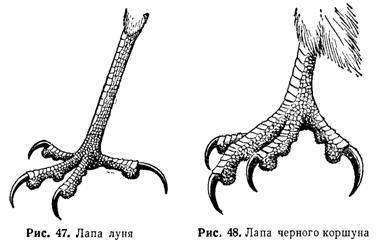 Определение пернатых хищников