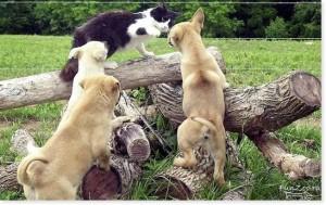 блюда из собак и кошек