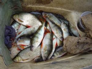 Что можно съесть вместе с рыбой? Часть 1