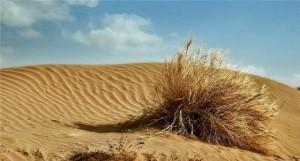 Человек в условиях автономного существования в пустыне
