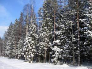 Ночлег зимой в лесу
