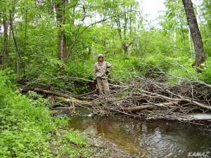 передвижение по лесу