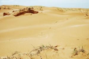 Выживание в пустыне. Часть 2