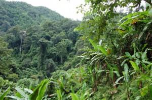Переход в джунглях