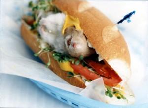 Блюда из хомяков и морских свинок
