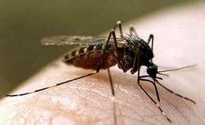 Профилактика и помощь при укусах комаров и москитов