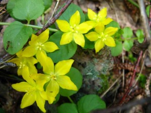 Цветы в лесу