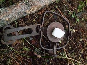 Установка ловушек и капканов