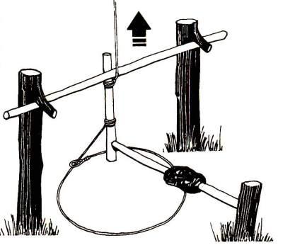 Натянутая веревка от наклоненного деревца идет к концу клеванта, который удерживается перекладиной. Рычаг с приманкой удерживает клевант на месте.