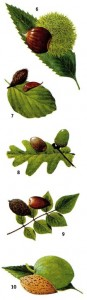 Съедобные орехи и семена растений