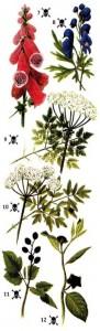 Ядовитые растения в лесу