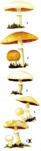 Съедобные грибы в лесу
