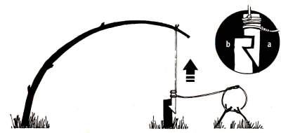 Сделайте на спусковом рычаге (а) зарубку, подходящую к зарубке на стойке (В). Вгоните стойку в землю. Прикрепите петлю к спусковому рычагу и используйте шнур, чтобы присоединить к конструкции согнутое деревце.