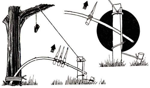 Силки капканы и ловушки на животных своими руками