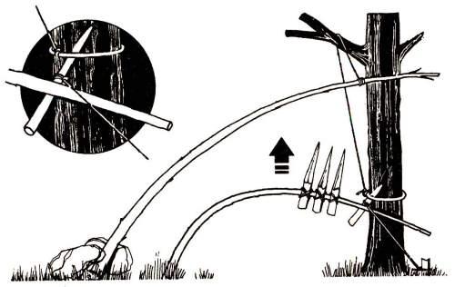 Арбалетная ловушка