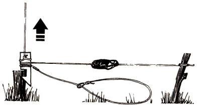 Стойку опоры приманки следует лишь слегка воткнуть в землю, так как она тоже должна подниматься в воздух вместе с петлей.