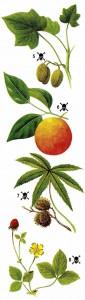 Ядовитые тропические растения