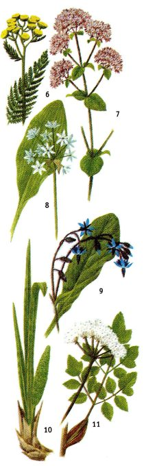 Реферат на тему съедобные растения 2910