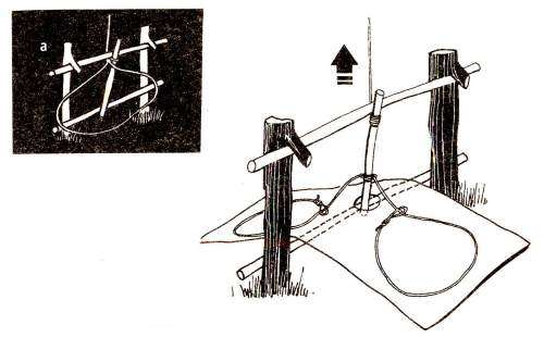 Подъемная ловушка с прямоугольным пазом на стержне для приманки Две палки втыкаются в землю и своими сучками удерживают перекладину, за которую прямоугольным пазом зацепляется вертикальный стержень с приманкой (присоединенный к натягивающей веревке). На стержне закреплены петли и приманка. Ставьте такую ловушку на открытых местах для ловли мелких хищников и свиней.