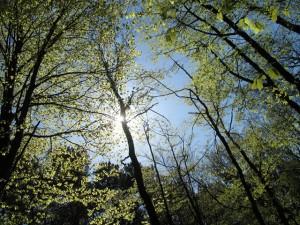 Полезные и ядовитые деревья