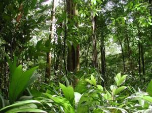 Выживание в тропических лесах