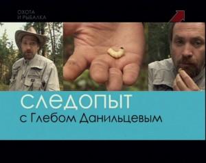 Серия 19. Грибы и ягоды в осеннем лесу.