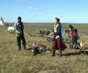 Как разделывать оленя