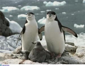 Охота на птиц в Арктике