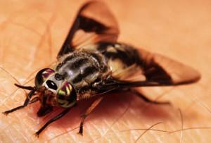 Укусы животных и насекомых