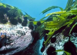 Добывание воды и еды на море