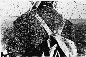 Кровососущие насекомые Арктики