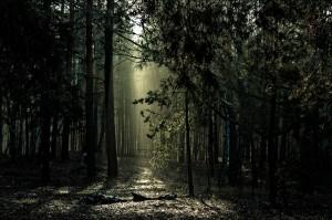 Психические нарушения при остро возникших жизнеопасных ситуациях