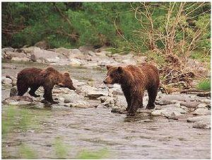 Оружие и снаряжение для охоты на бурого медведя