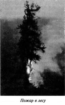 Лесные и степные пожары