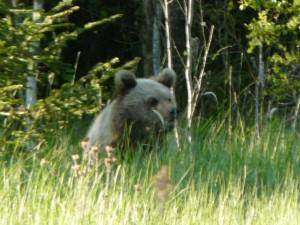 Если встретил медведя. Часть 2