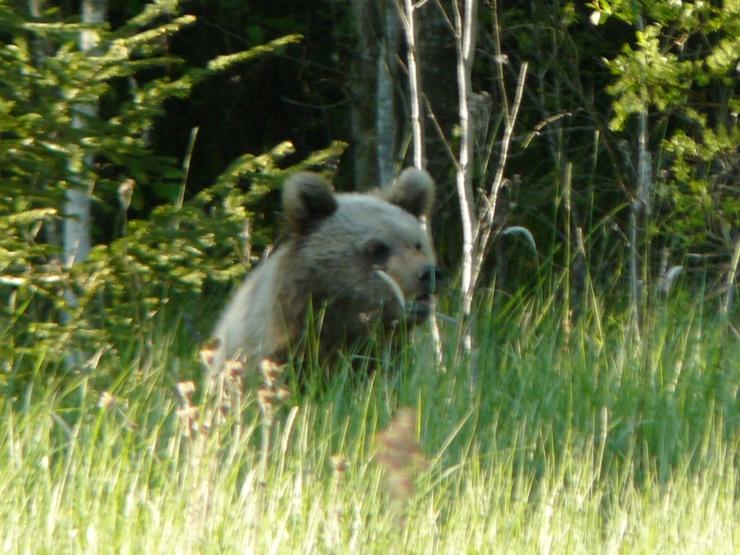 выживание в дикой природе встреча с медведем посещаемые достопримечательности его