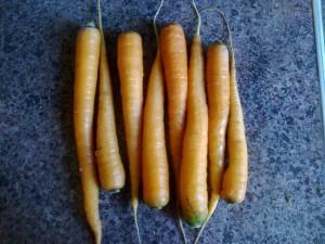 Заготавливаем морковь для похода