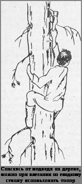 Подпись:<br /> Спасаясь от медведя на дереве, можно при влезании по гладкому стволу использовать топор<br />