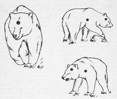 Рукопашная с медведем