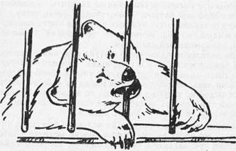 «Свадьба» у медведей