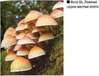 съедобные грибы донецкой области фото с описанием