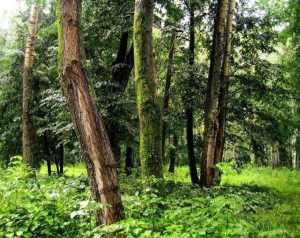 Почему важно уметь ориентироваться в лесу