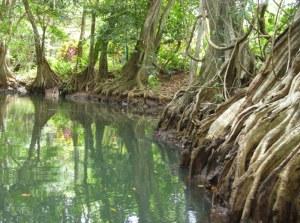 Дорога длиною в реку